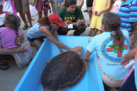Turtle Hospital staff try to calm turtle a few minutes before release.